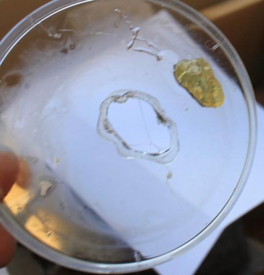 OmegaVia dissolved my petri dish.
