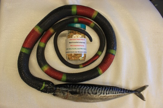 Omega-3 Snake Oil