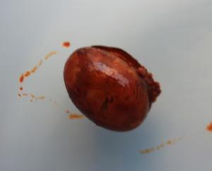 Frezzor GLM capsule with mash